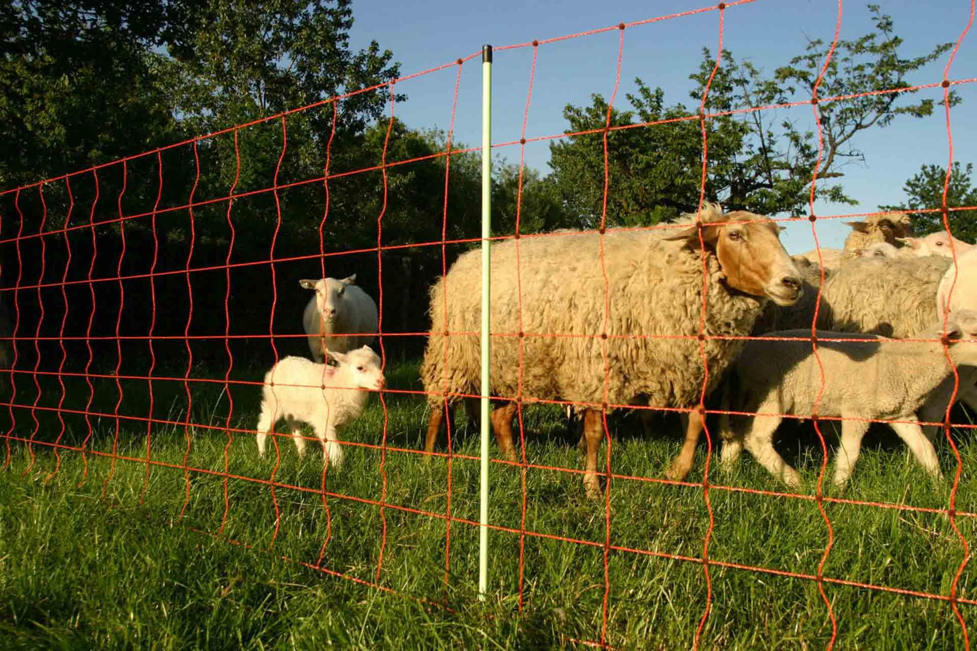 Schafzaun günstig kaufen bei Siepmann