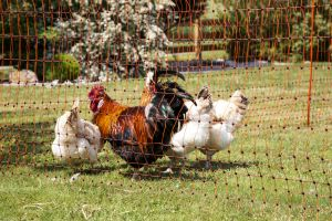 poultry-net-112-cm-3.jpg