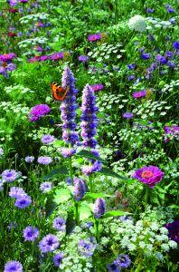 """Wildblumenmischung """"Bauerngarten"""""""
