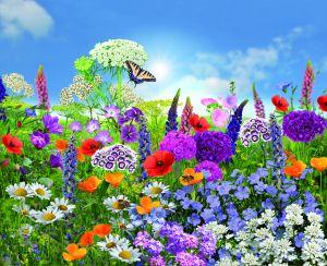 Blumenmischung Insektenparadies