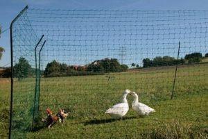 Hühnergatter  zerlegbar