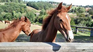 Kiepenkerl Kräuter-Select für Pferde