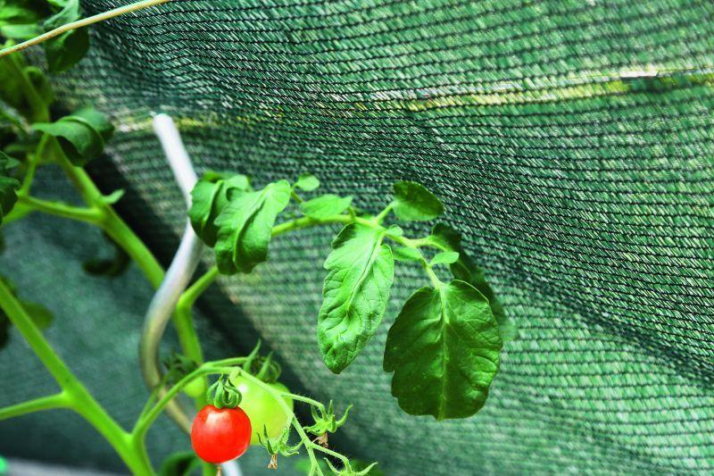 als Schattiernetz für Pflanzen