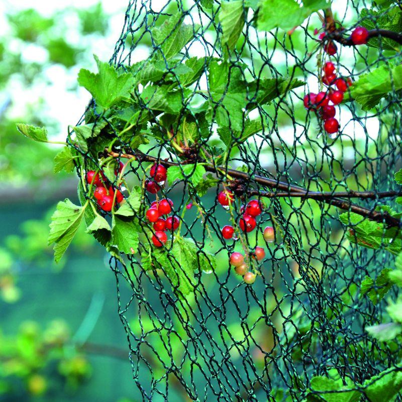 Vogelschutznetz dunkelgrün