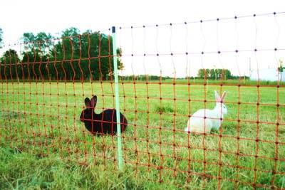 Euro-Netz Kaninchen Anwendung