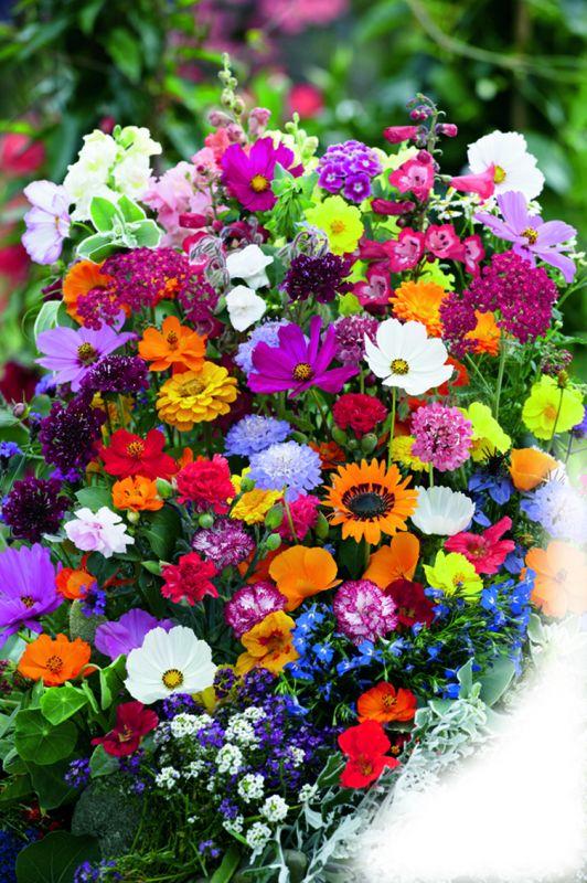 Blütensymphonie