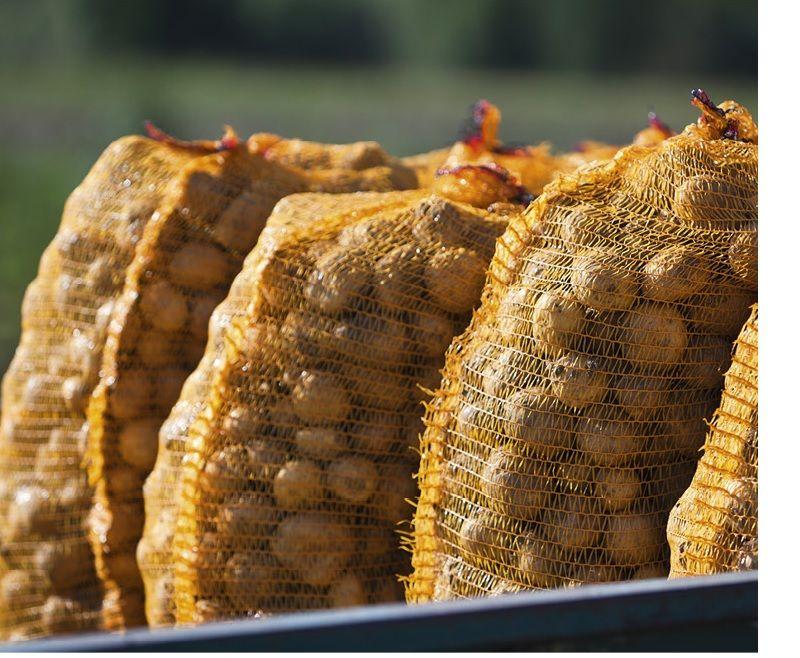 Kartoffel-Raschelsäcke 12,5 kg