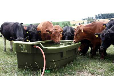 1000 Liter Weidetränke