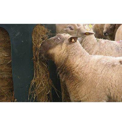 """Heuglocke """"Mini"""" für Schafe"""