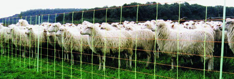 Schaf und Euronetz Kombi