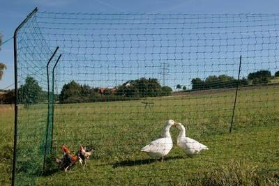 Hühnergatter