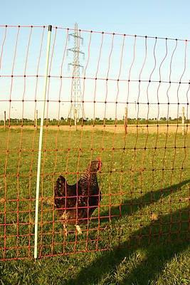 Euro-Netz Geflügel mit Huhn