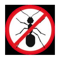 gegen Ameisen